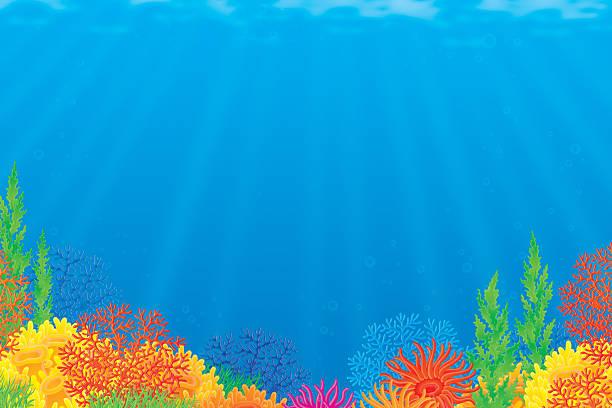 ocean floor clipart - photo #17