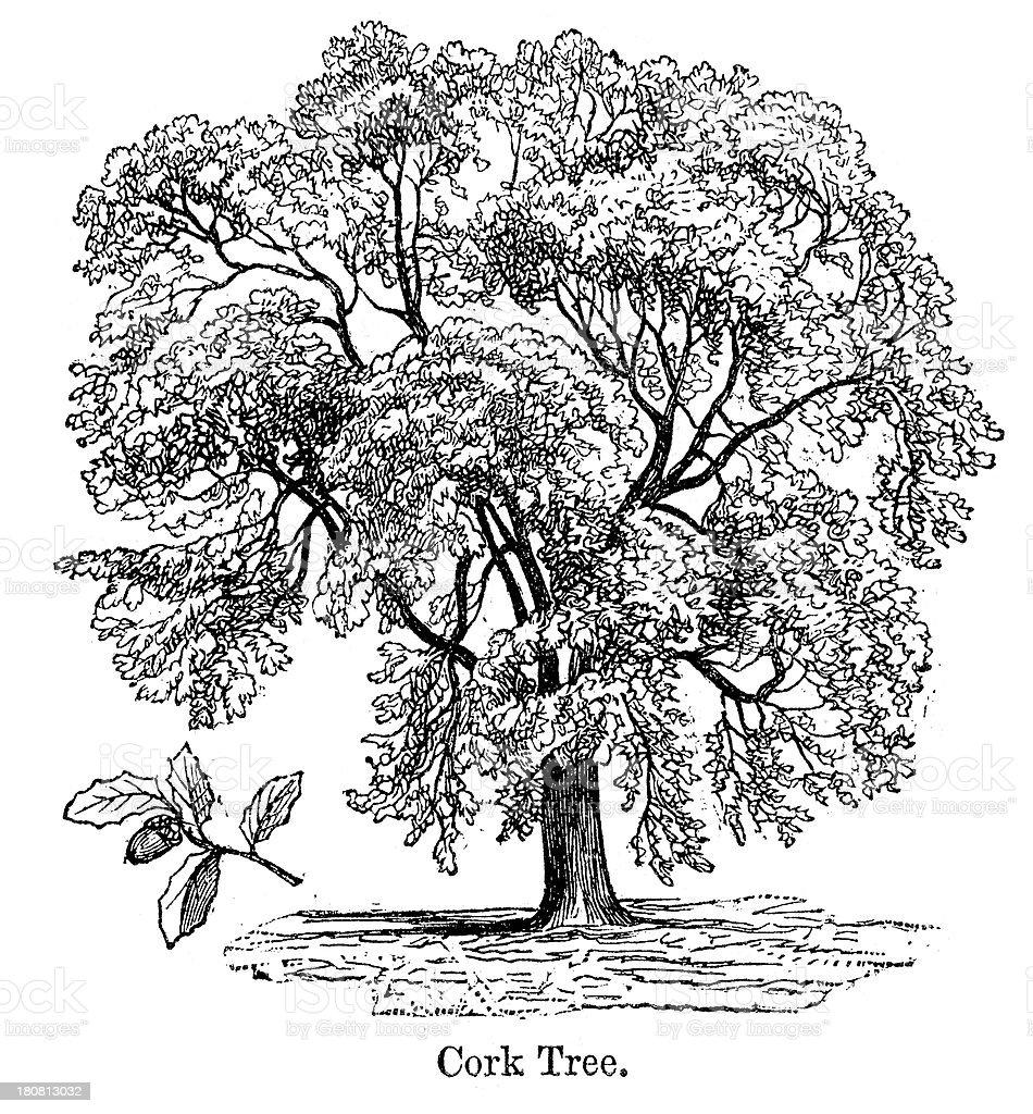 Cork Tree royalty-free stock vector art