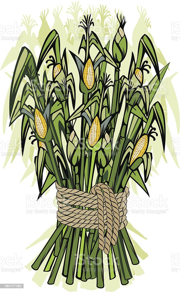 Corn harvest royalty-free stock vector art