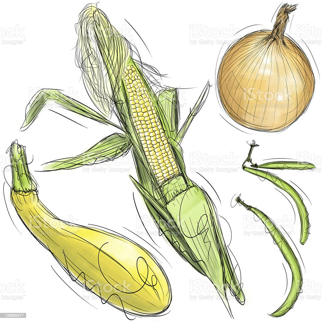Corn, onion, squash, and green beans royalty-free stock vector art