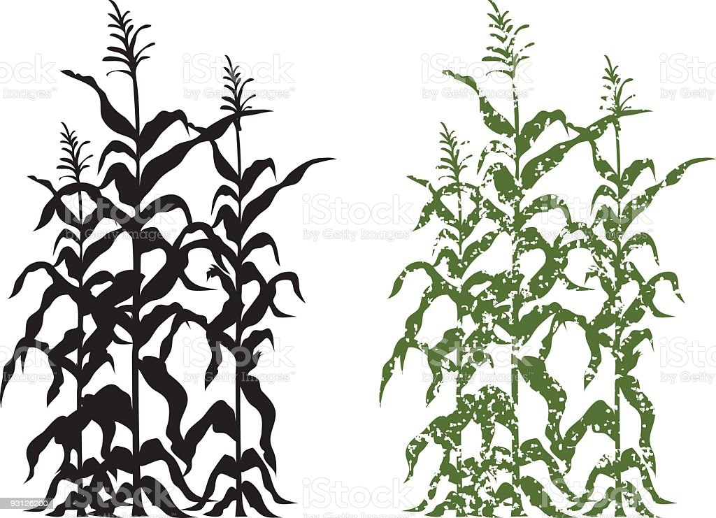 Corn Stalk Plants in Black and Green Grunge Vector Illustration vector art illustration