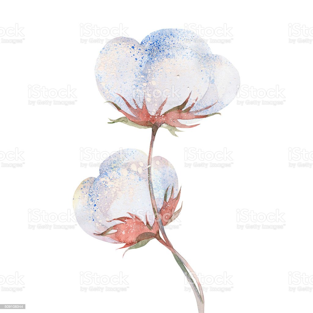 cotton plant flower vector art illustration