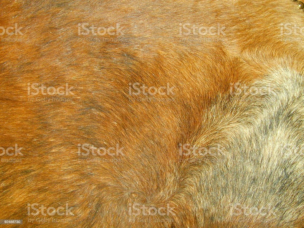 Cowhide vector art illustration