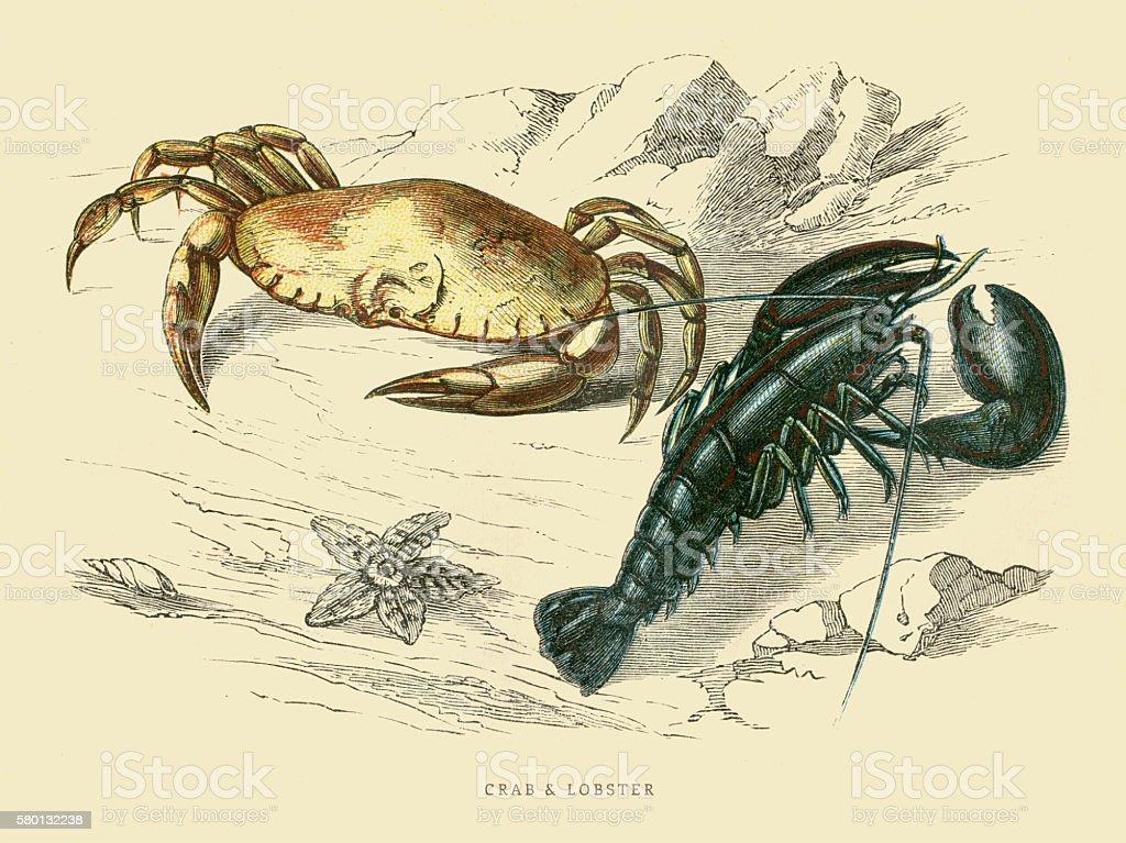 Crab and Lobster 1851 vector art illustration