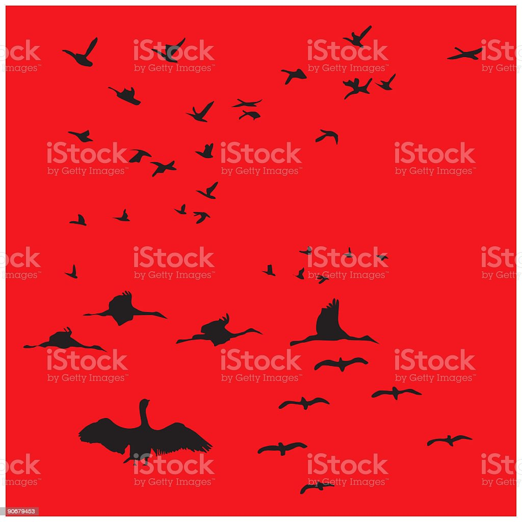 Creative Elements - Birds royalty-free stock vector art