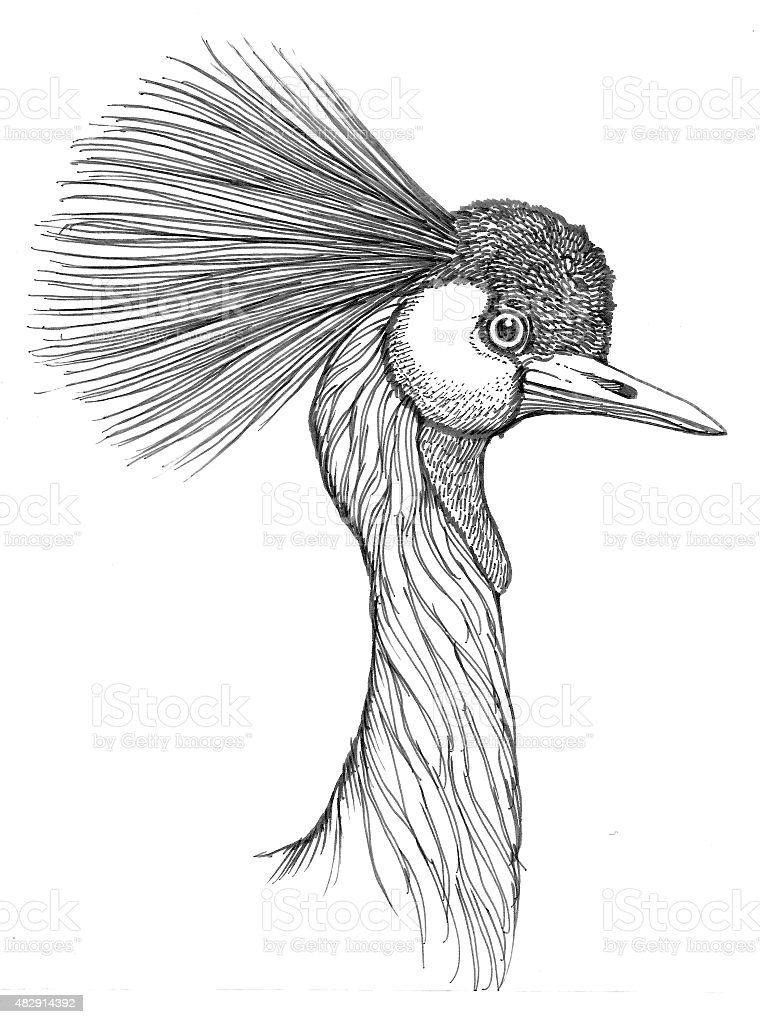 Crested Crane Lizenzfreies vektor illustration
