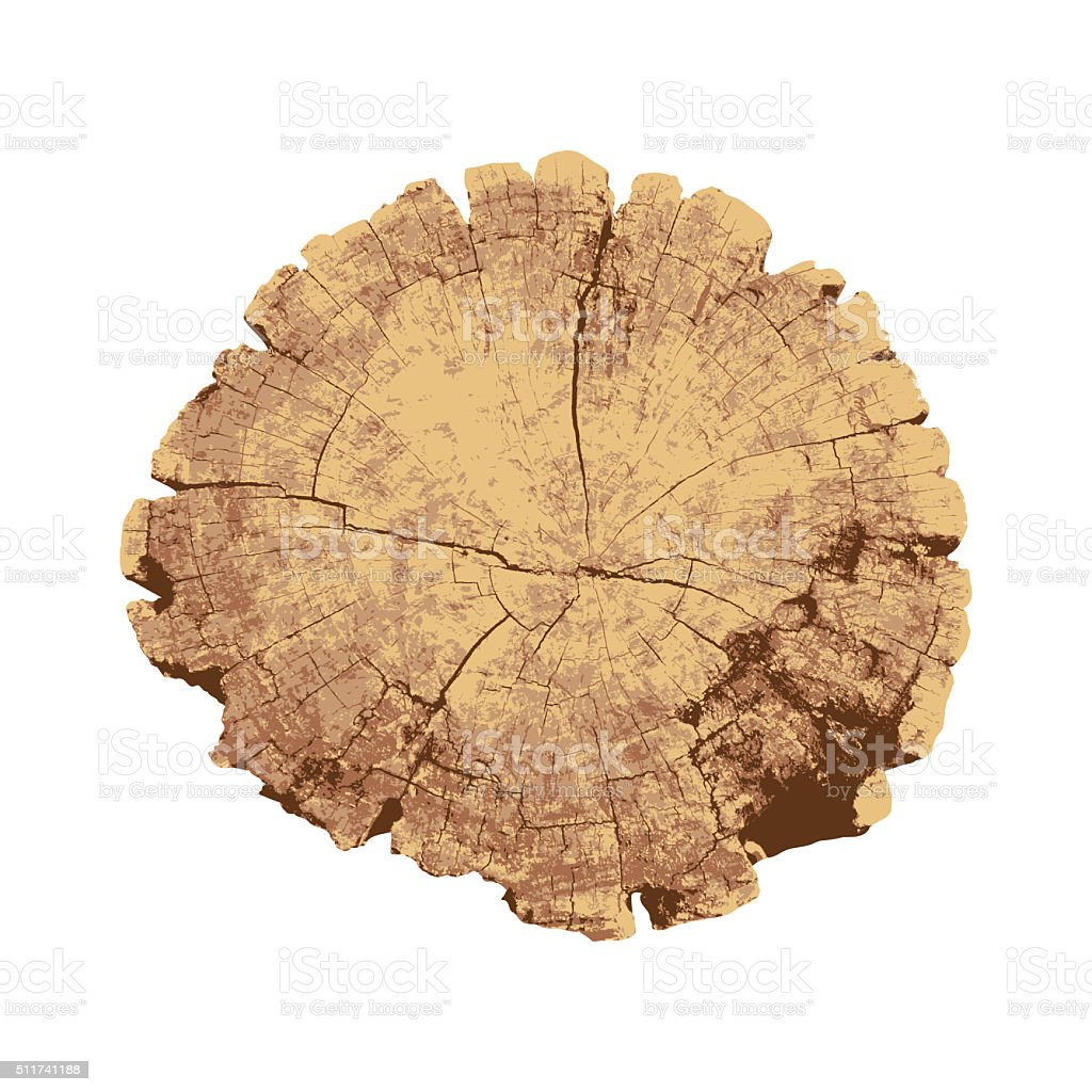 cross section of tree, tree ring, wood, isolated on white background vector art illustration