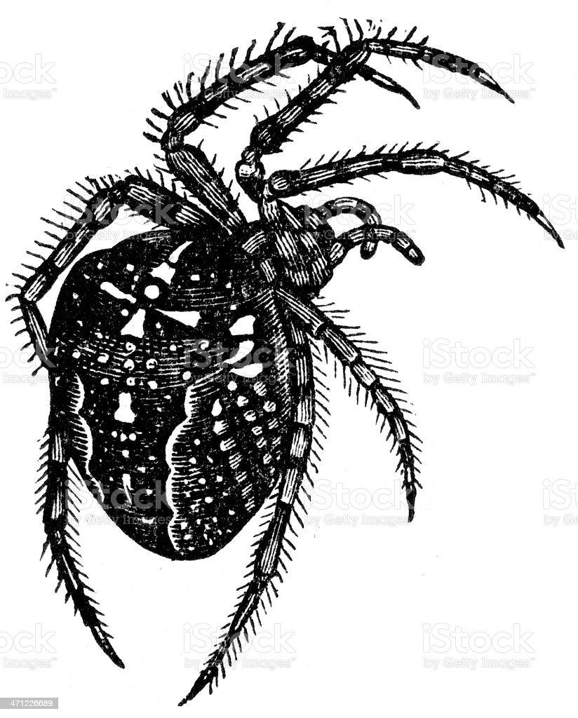 cross spider vector art illustration