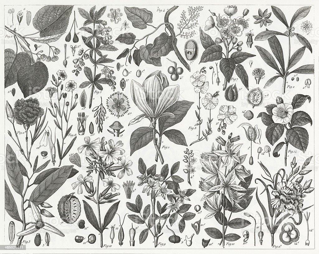 Cultivated Ornamental Plants vector art illustration