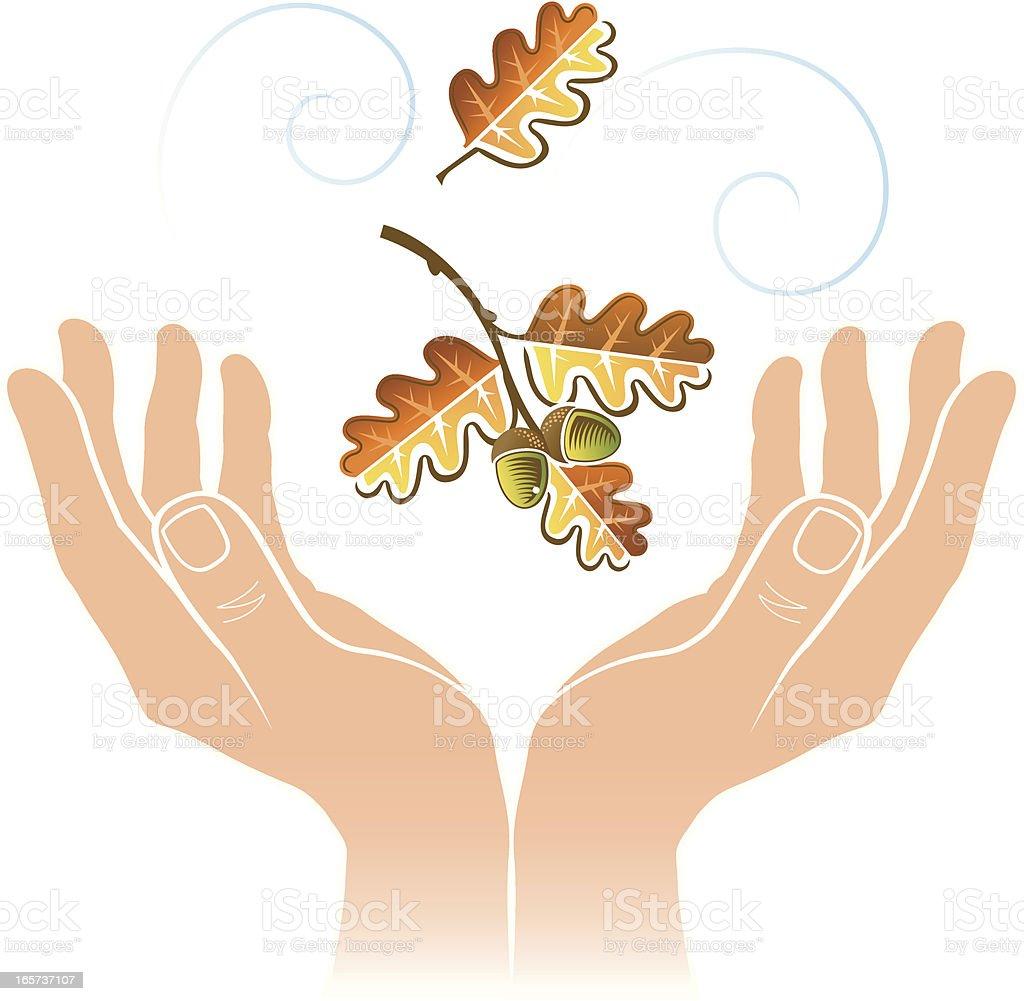 Cupped hands oak leaf. vector art illustration