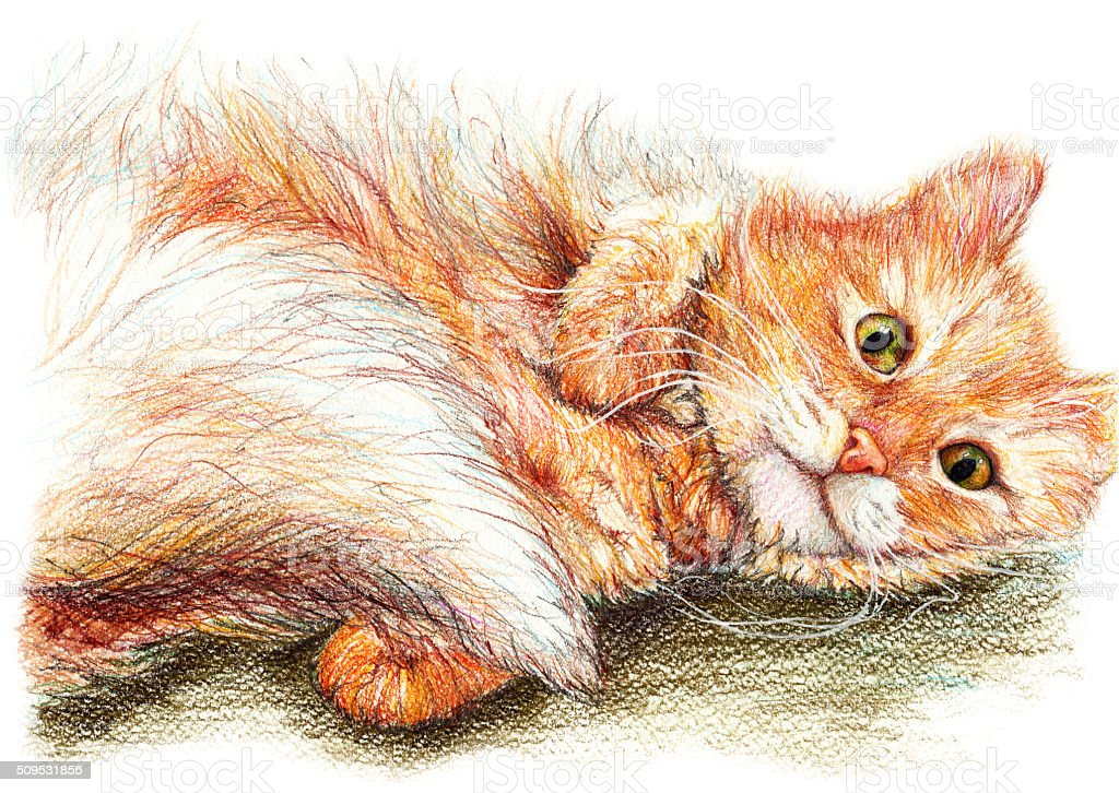 Cute nice ginger fluffy cat hand drawn art vector art illustration