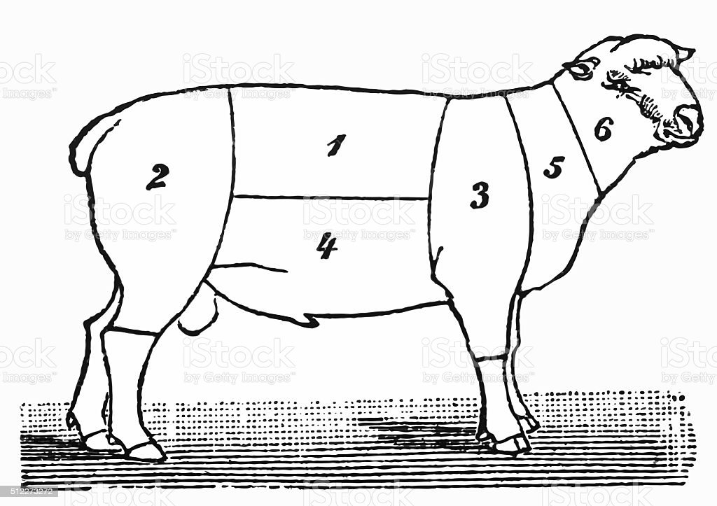 Cuts of lamb or mutton diagram vector art illustration