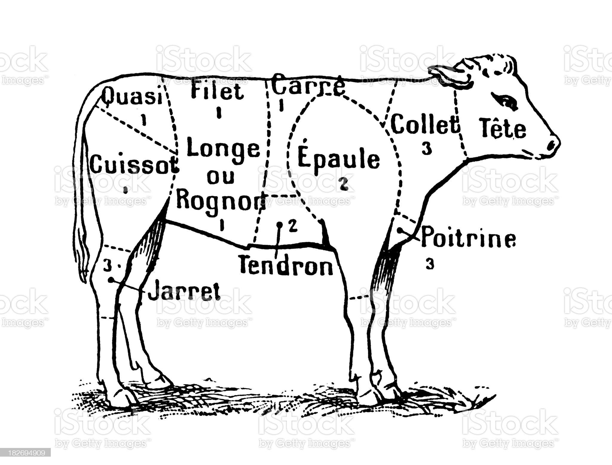 Cuts of Veal (Isolated on White) royalty-free stock vector art