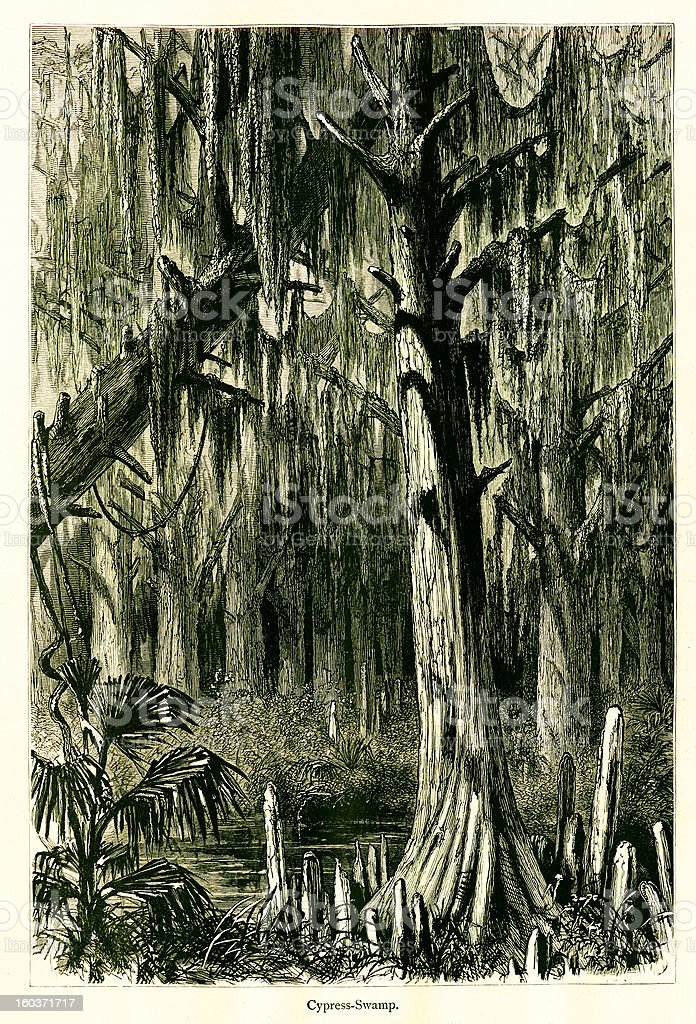Cypress Swamp, Mississippi River, USA royalty-free stock vector art