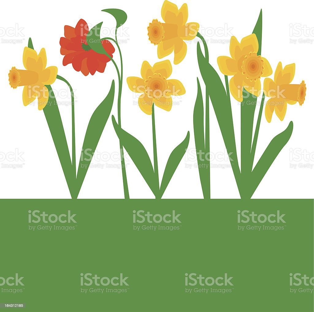 'Daffodils plus one' royalty-free stock vector art