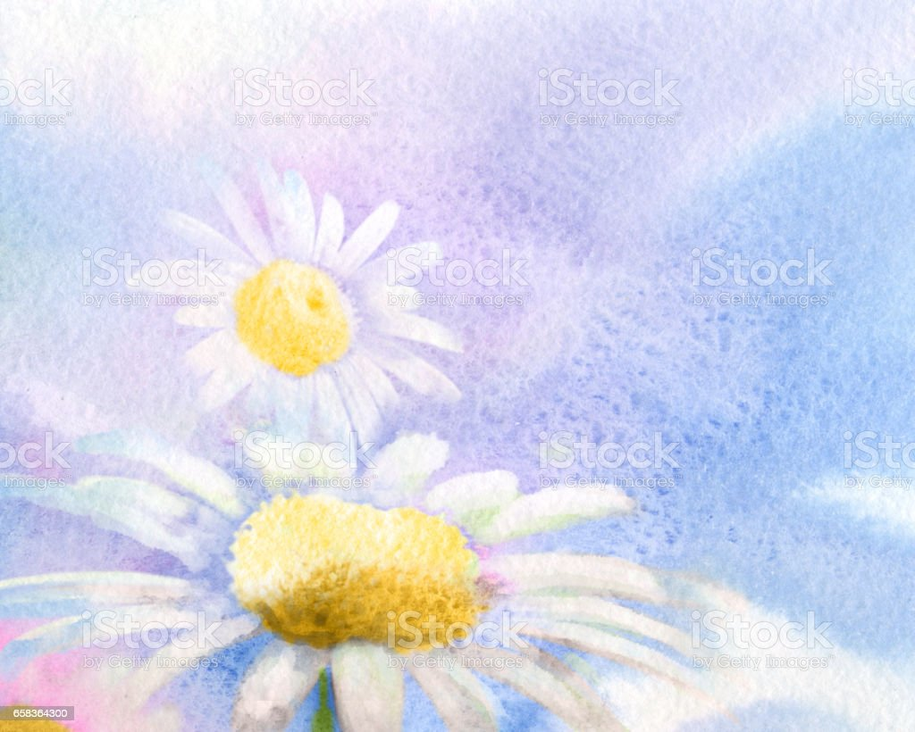 Daisy, watercolor spring background vector art illustration