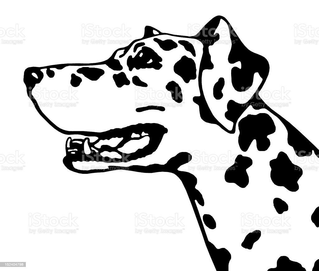 Dalmatian Dog royalty-free stock vector art