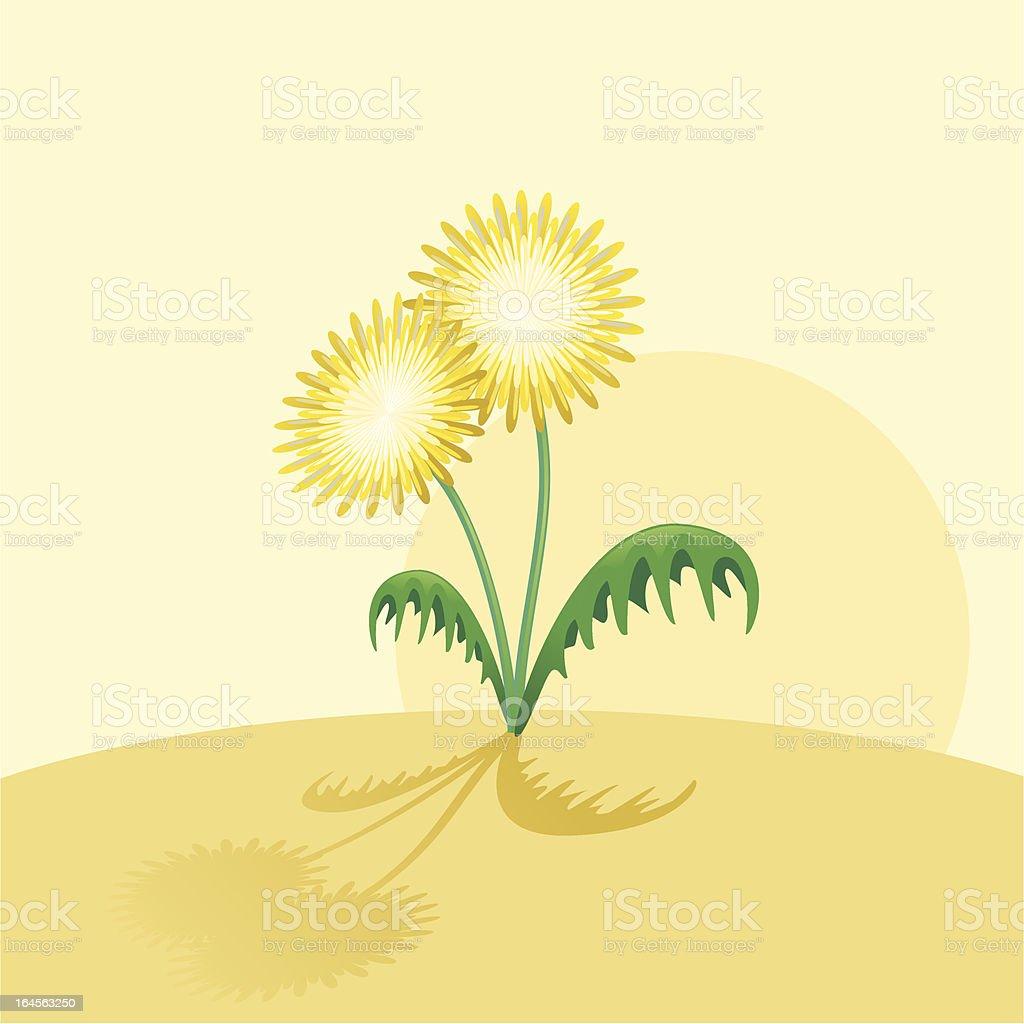Dandelion vector art illustration