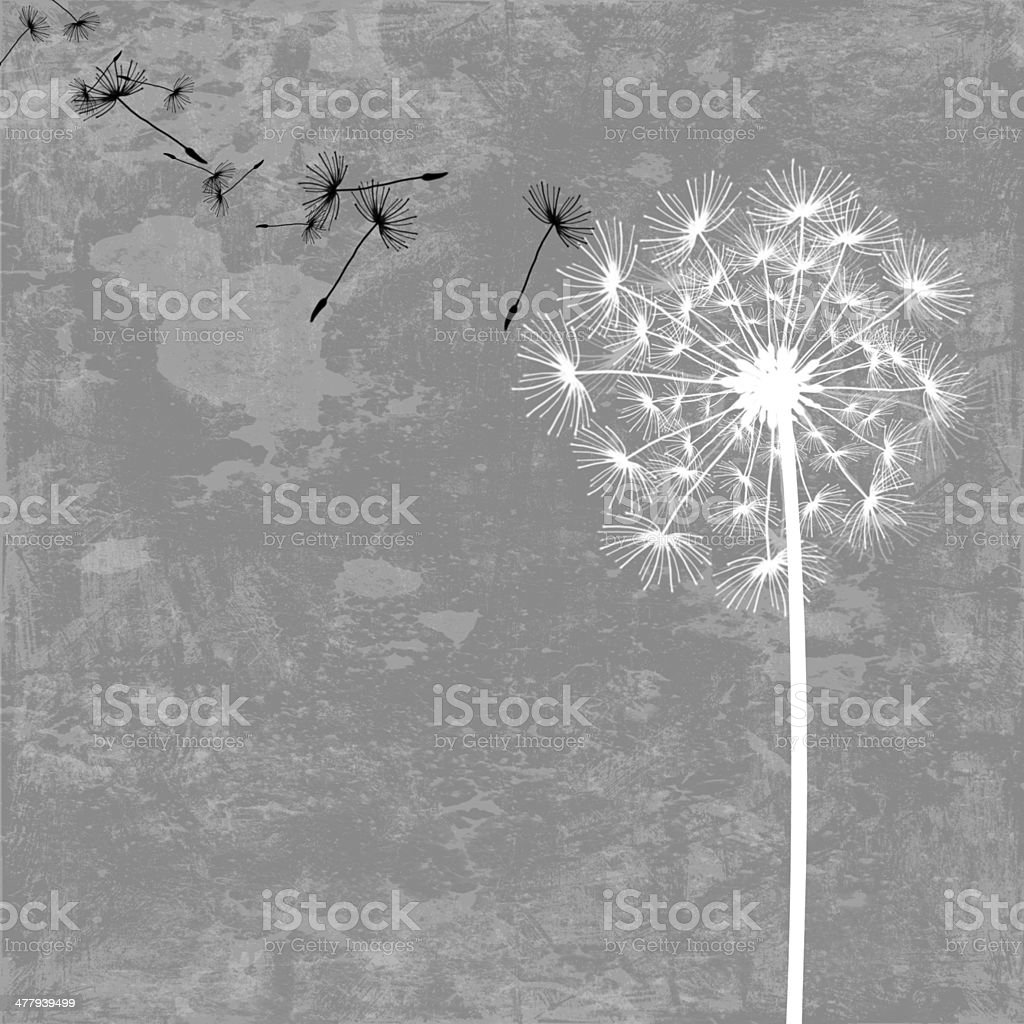 dandelion with seeds in the wind royalty-free stock vector art