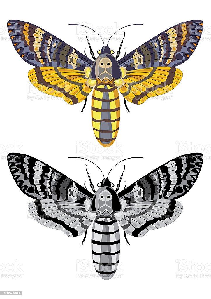 death's head hawk moth vector art illustration