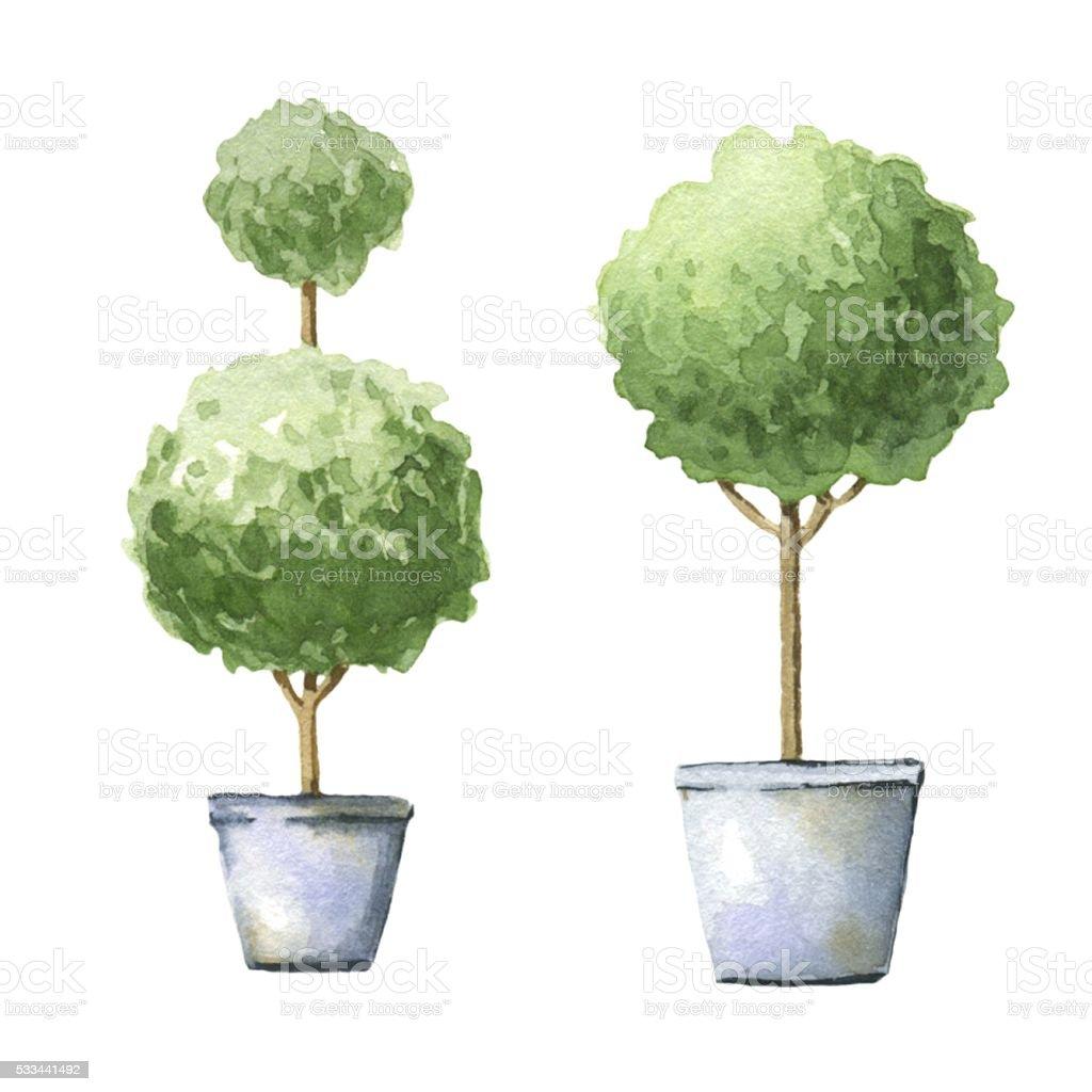 Decorative trees in pots. vector art illustration