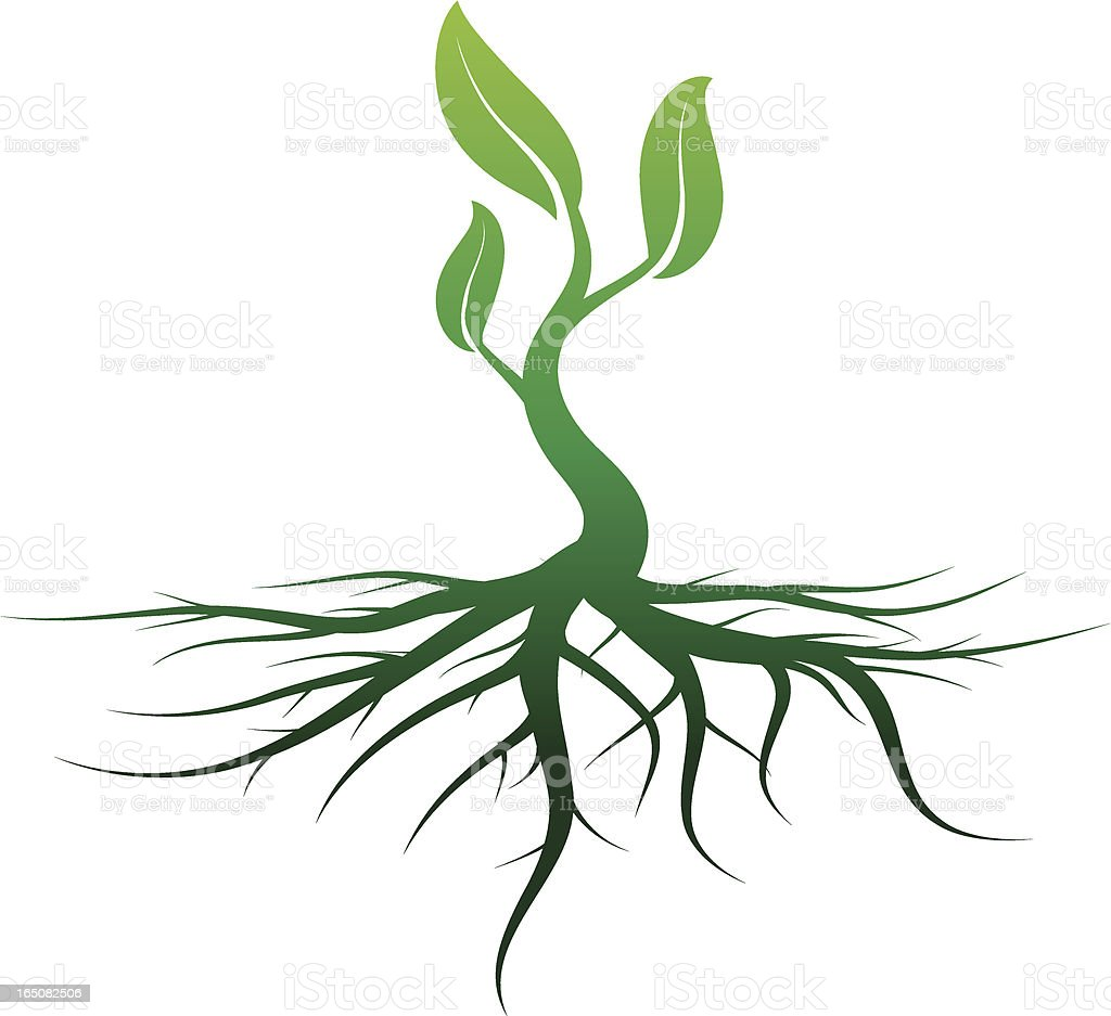 deep rooted vector art illustration