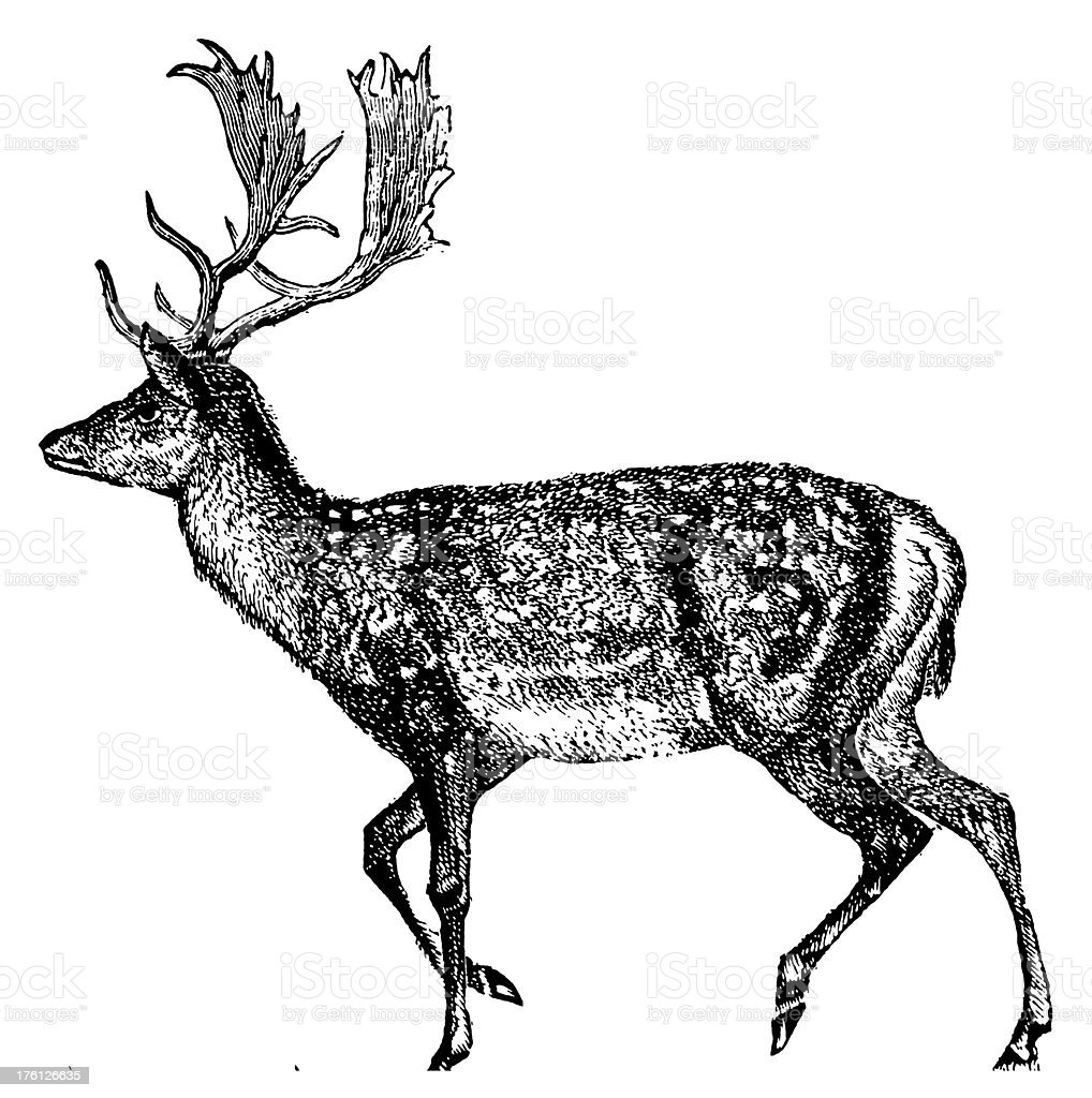 Deer | Antique Animal Illustrations royalty-free stock vector art