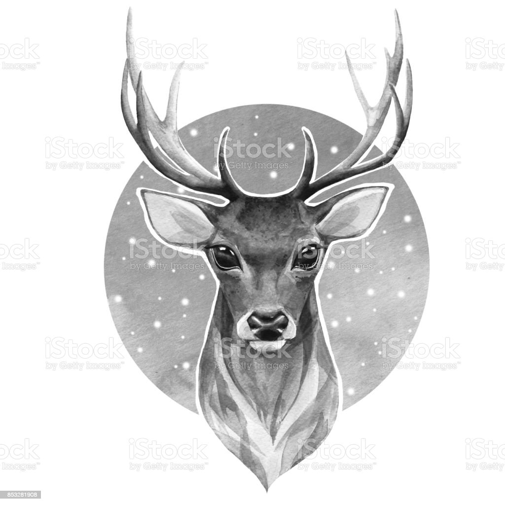 Deer. Black and white illustration vector art illustration