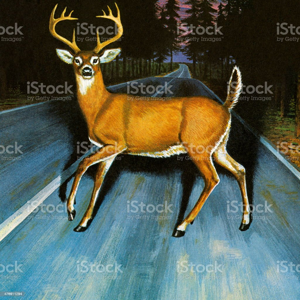 Deer in the Headlights vector art illustration