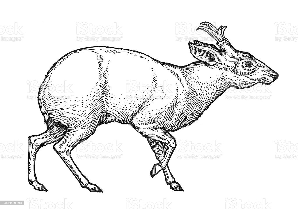 Deer, kleine Lizenzfreies vektor illustration