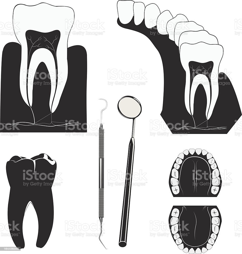 Dental royalty-free stock vector art