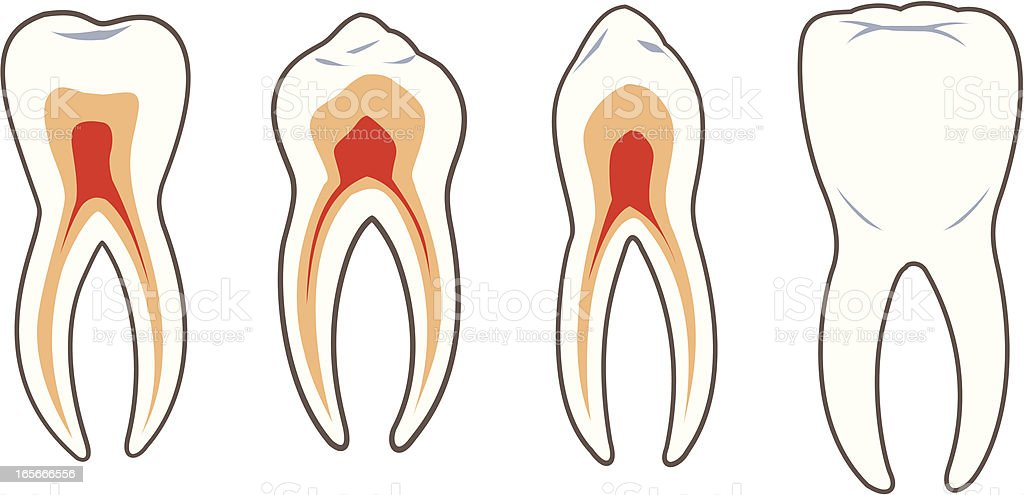 Dental-Teeth royalty-free stock vector art
