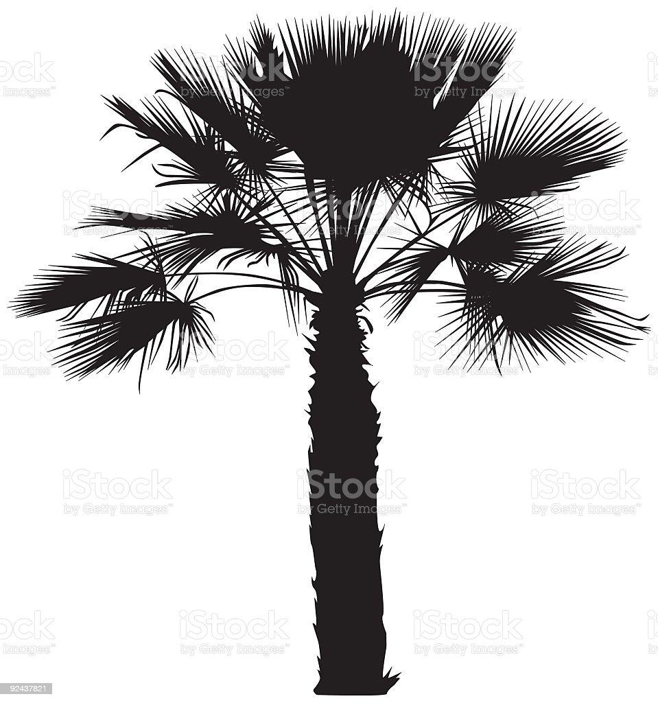 Desert Palm tree (vector) royalty-free stock vector art