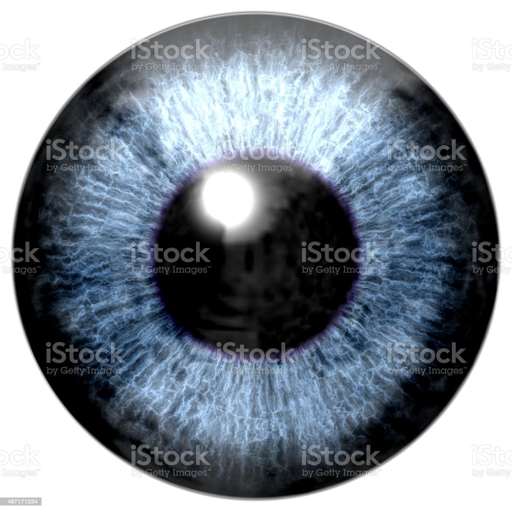 Detail of eye with blue colored iris and black pupil vector art illustration