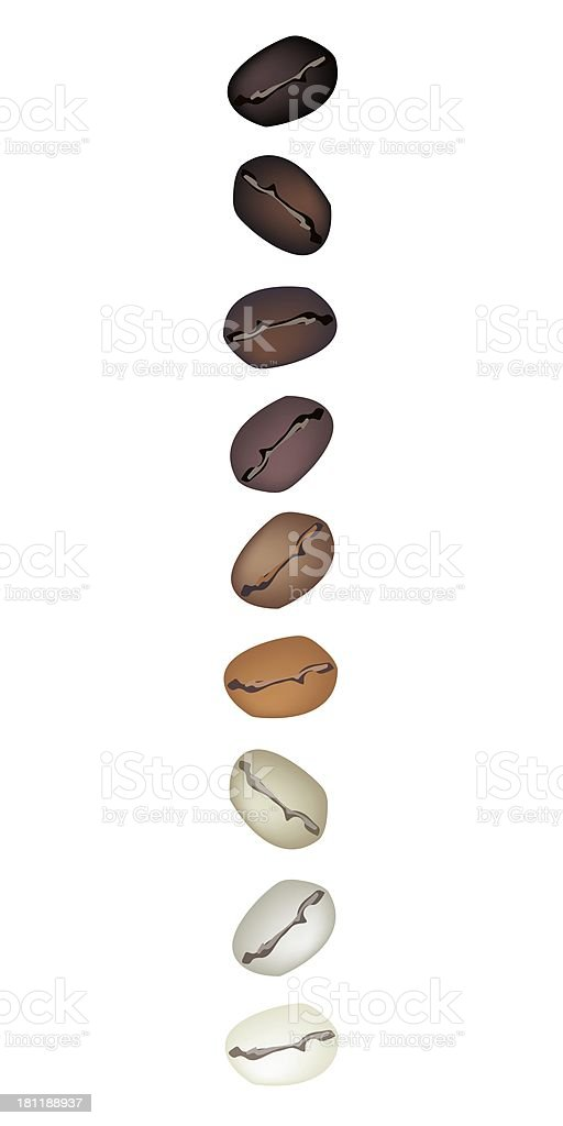 Different Colors of Coffee Beans in A Vertical Row royalty-free stock vector art
