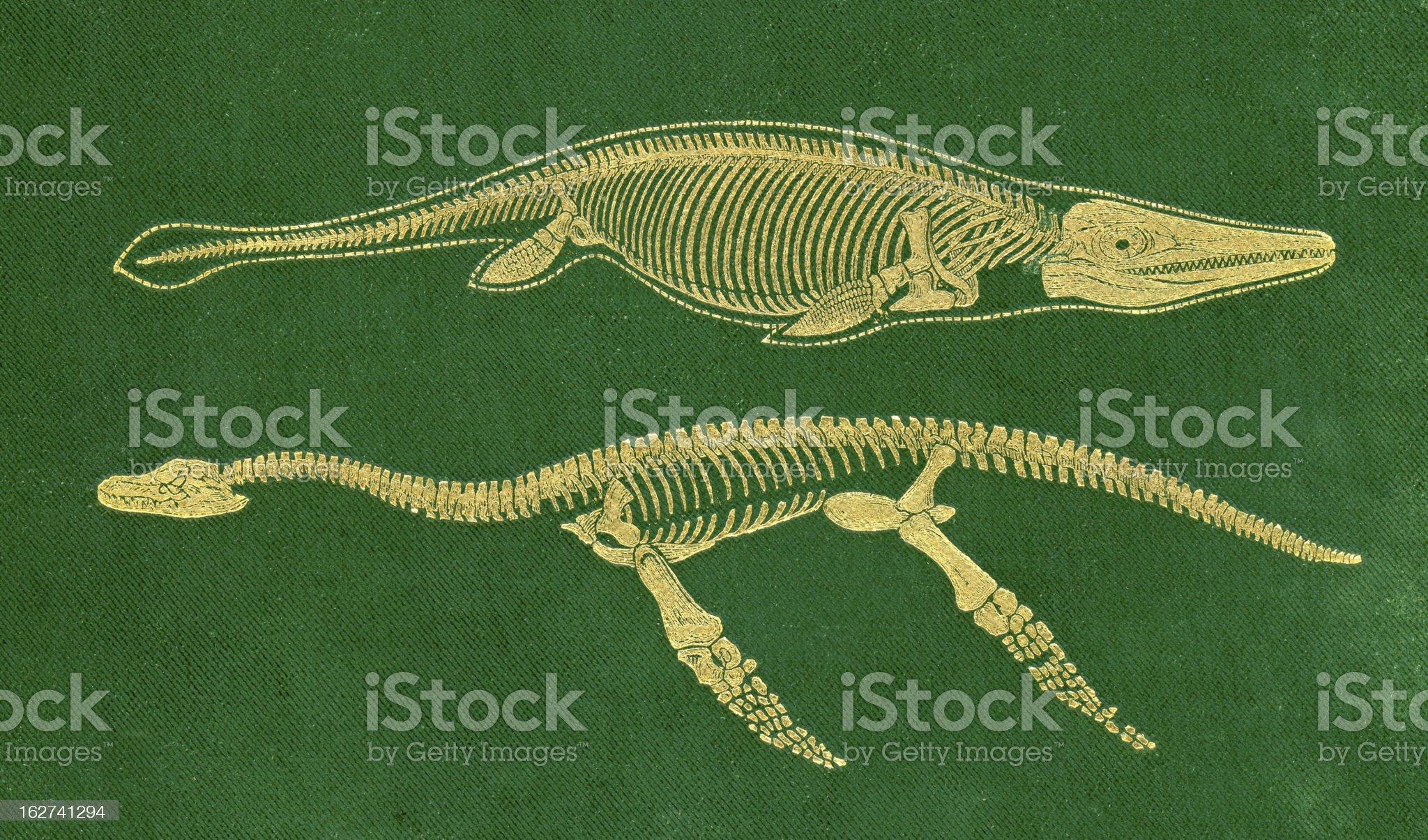 Dinosaur - Ichthyosaurus and Plesiosaurus royalty-free stock vector art