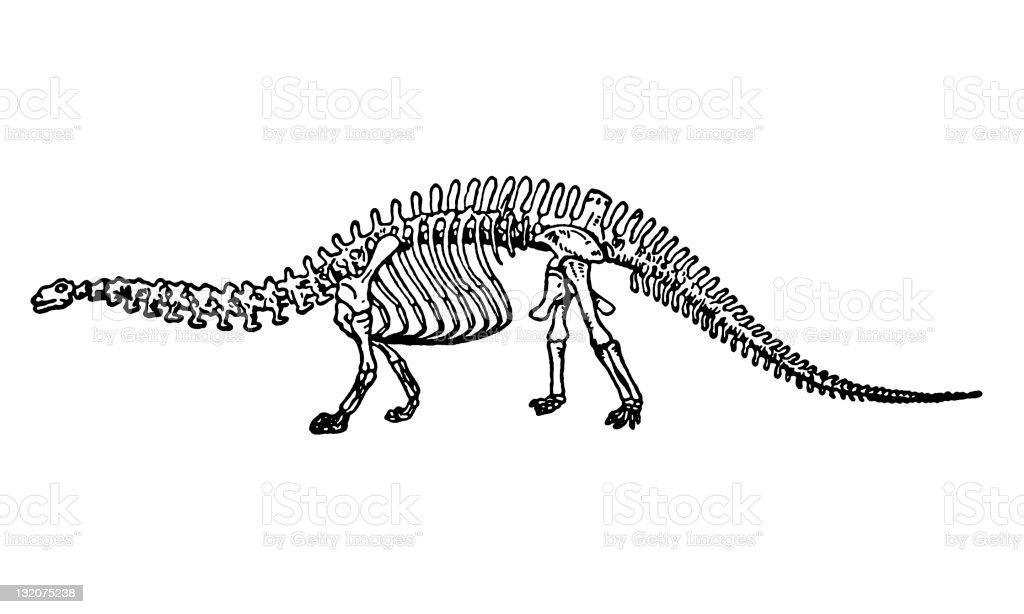 Dinosaur Skeleton royalty-free stock vector art