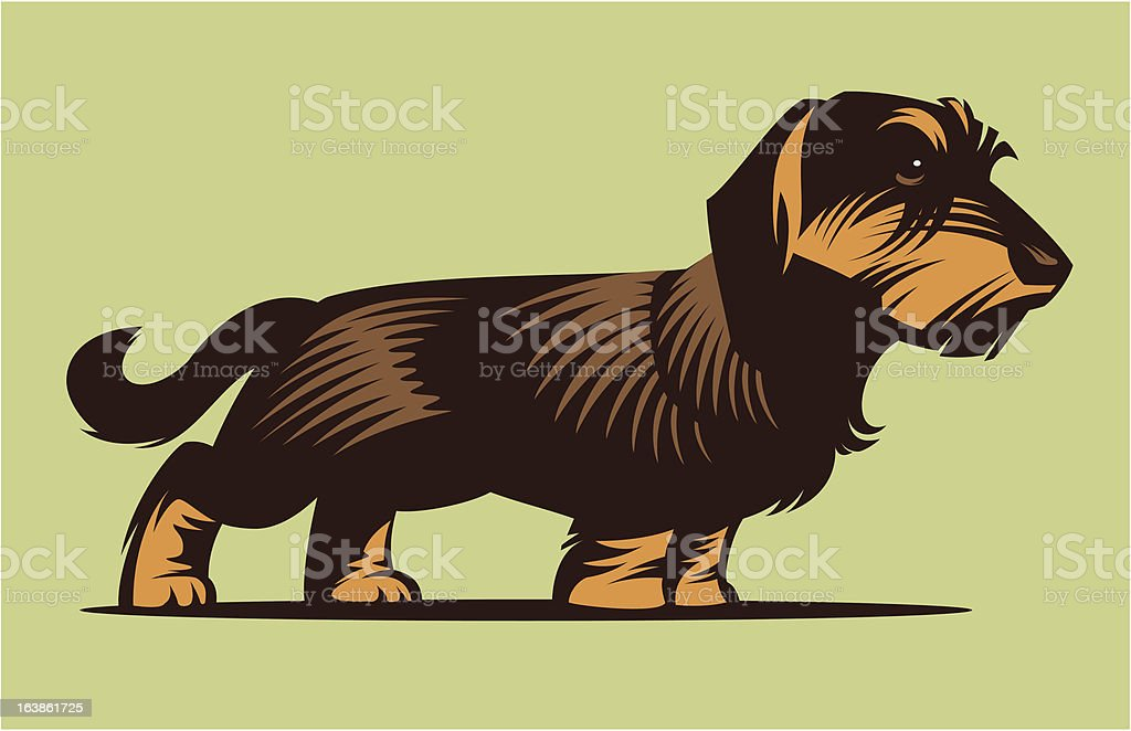 Dog Dachshund vector art illustration