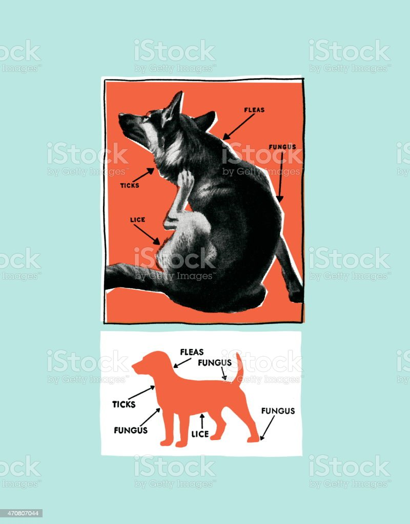 Dog diagram vector art illustration