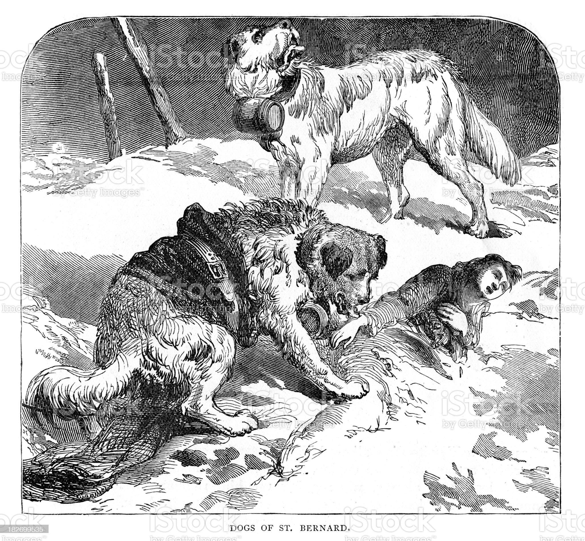 Dogs of St Bernard royalty-free stock vector art