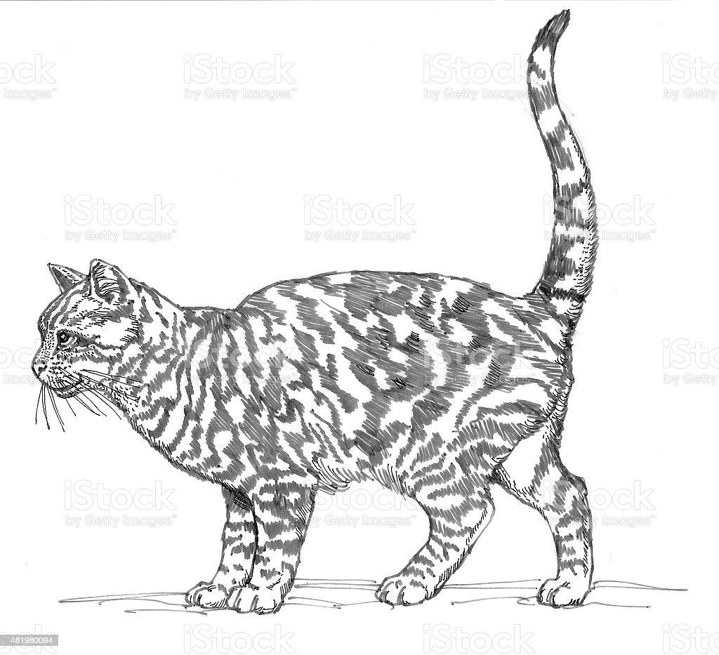 Domestic Cat Lizenzfreies vektor illustration