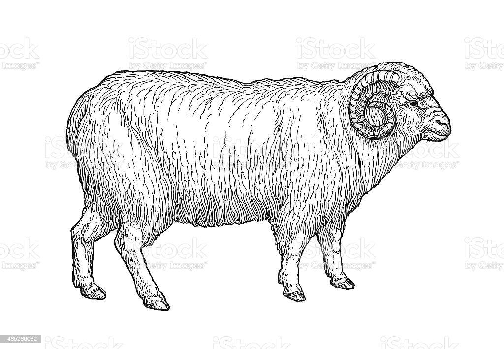Domestic Schaf 4 Lizenzfreies vektor illustration