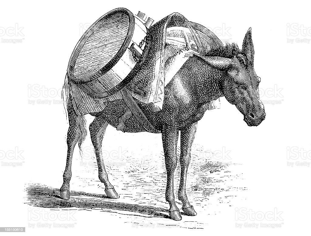 Donkey carrying water vector art illustration