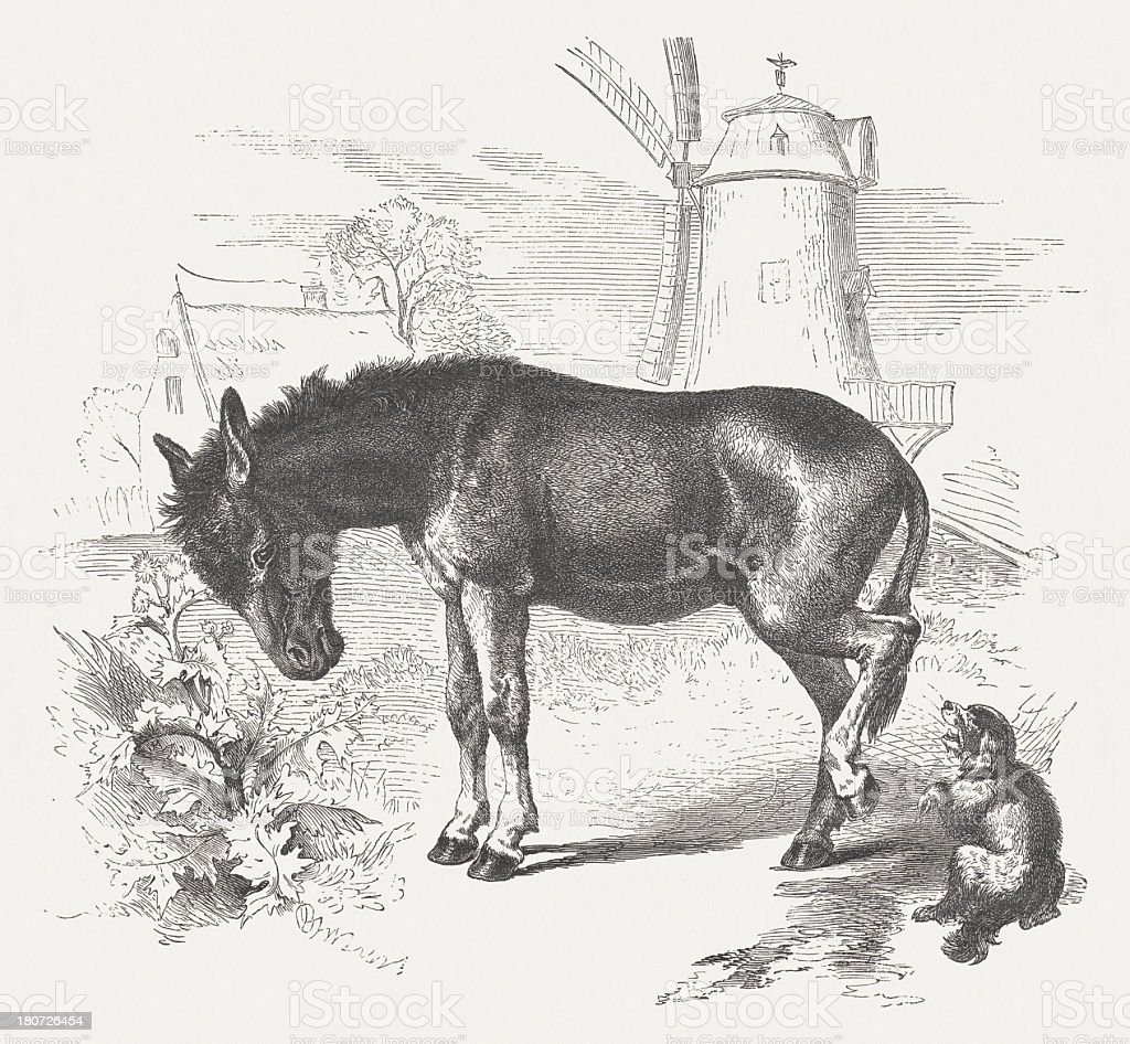 Donkey (Equus asinus asinus), wood engraving, published in 1875 royalty-free stock vector art