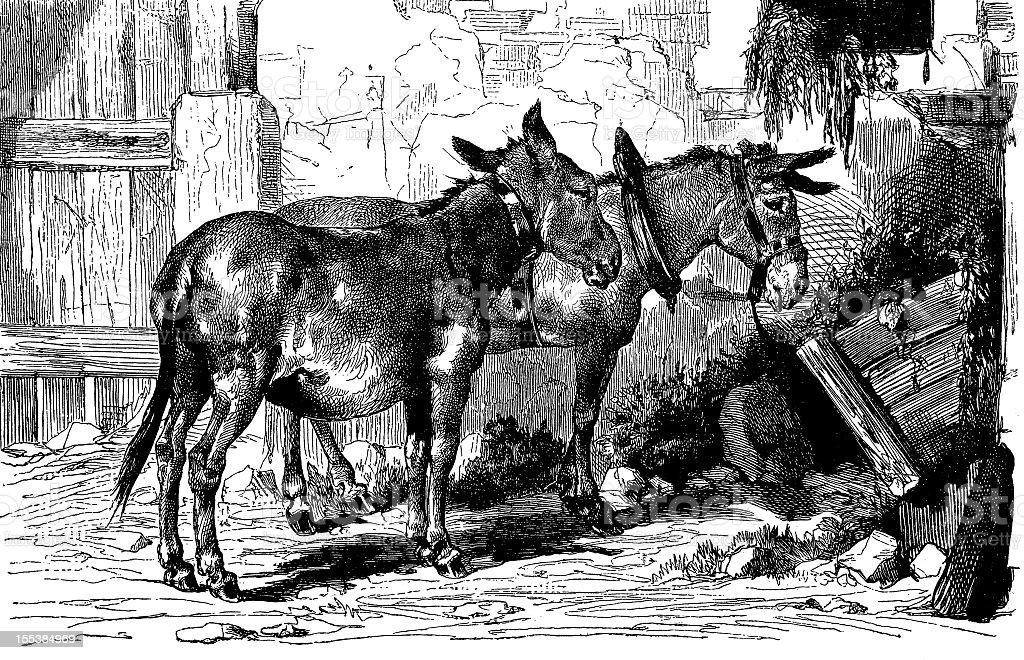Donkeys royalty-free stock vector art