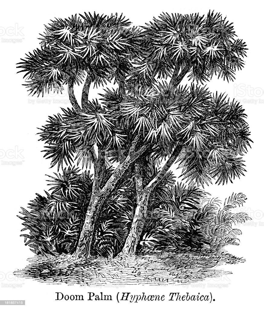 Doum palm royalty-free stock vector art