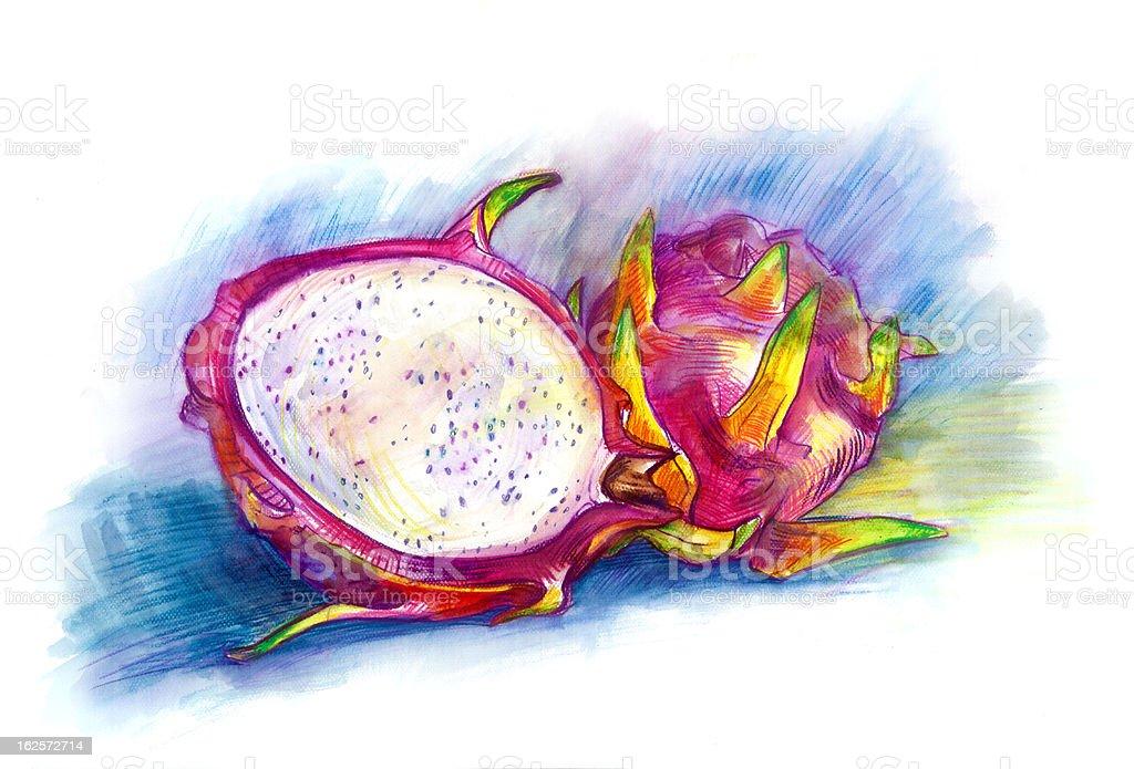 Dragon fruit vector art illustration