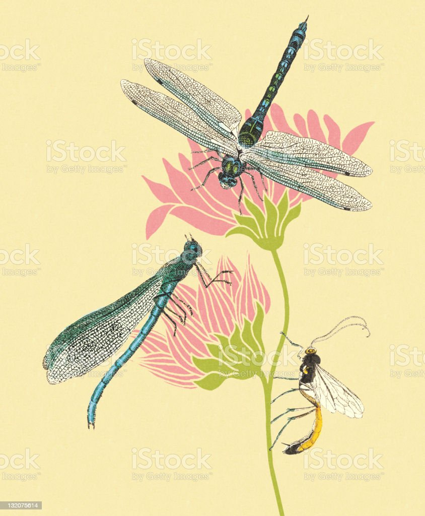 Dragonflies and Insect on Flowers royalty-free stock vector art