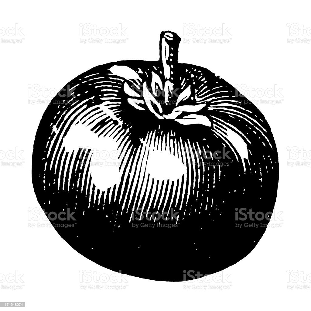 A drawing of a Tomato in black and white vector art illustration