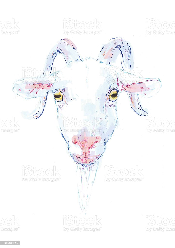 Drawing of a white goat vector art illustration